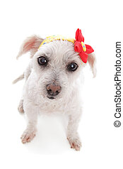 White dog wearing bandana with flower decoration
