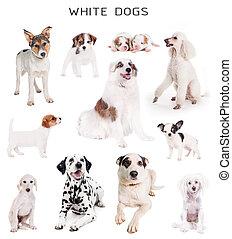 White dogs set
