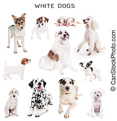 White dogs set