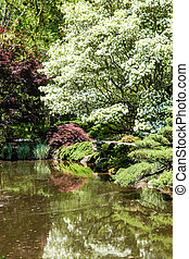 White Dogwood Over Lake in Garden