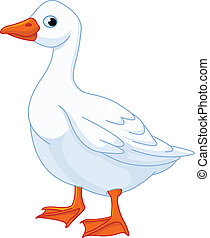 White domestic goose - Illustration of white domestic goose...