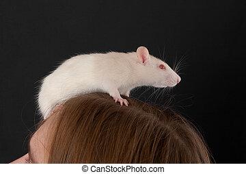 rat on a head