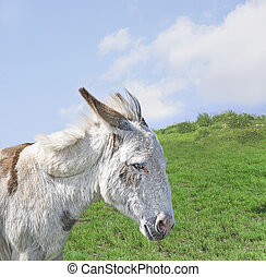 White Donkey in a Beautiful Meadow - White donkey in a...