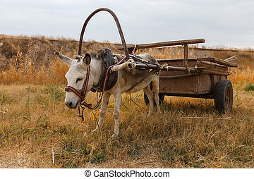 white donkey with a cart in the field