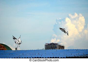 White dove against sky concept