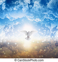 White dove descends from heaven - Holy spirit bird flies in...