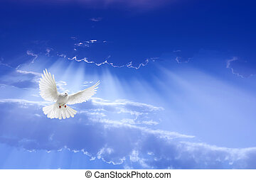White dove with outstretched wings flying over dramatic sky