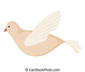 white dove flying on white background