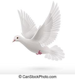 White dove - Flying white dove on white background as symbol...