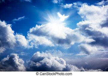White dove in heavenly sky