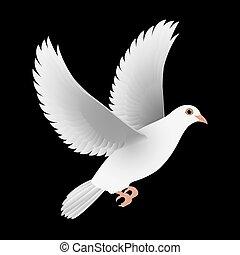 white dove isolated black vector