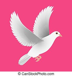 white dove isolated pink vector