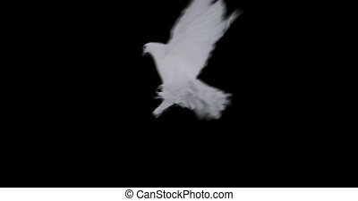 White dove of peace flying on transparent background in slow motion