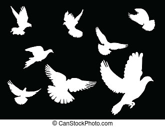 dove - white dove on black background