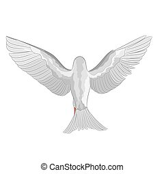 White dove pigeon vector.eps