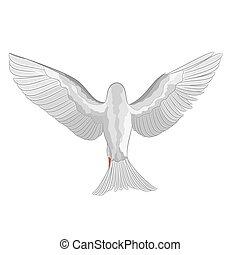 White dove pigeon vector.eps