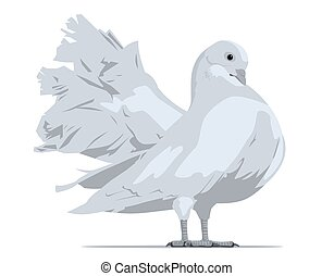 White dove. Vector illustration