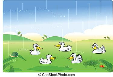 White ducks playing in the rain