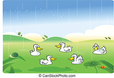White ducks playing in the rain