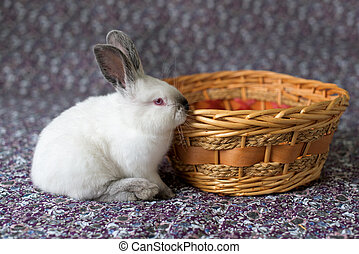 White Easter Bunny with red eyes in a wooden basket