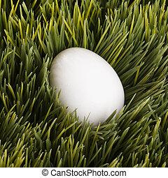 White egg in grass.