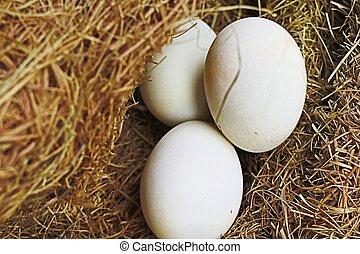 white egg