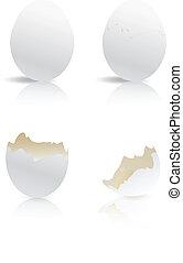 white eggs and broken egg shells isolated
