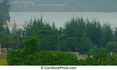 White Egret at Phuket Airport