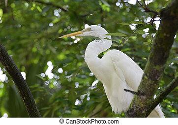 White Egret Bird Sitting in a Tree