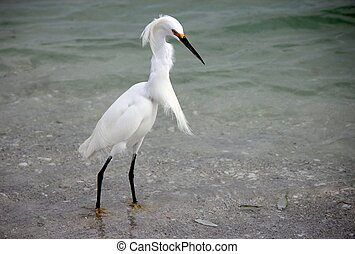 White Egret by Ocean