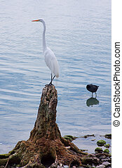 White Egret Perched on Shore