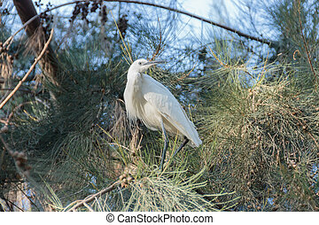 White egret sitting on the green branch of tree