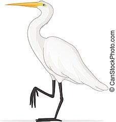 White Egret - White egret vector illustration