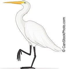 White Egret - White egret vector illustration