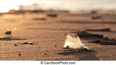 white feather blown by the wind on the sandy beach.
