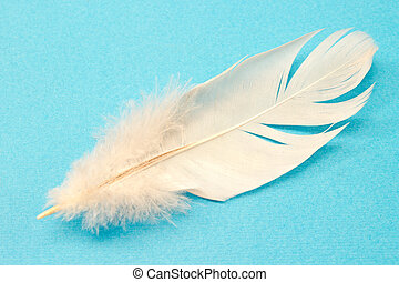 White feather isolated on blue background