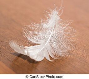 white feather on a wooden background