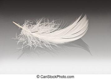 white feather on grey