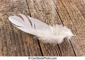 White feather on old wooden background