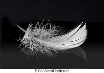 white feather on solid black background with reflection