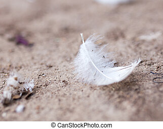 white feather on the ground