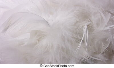 White feather revolve