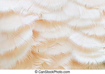 White Feather Texture