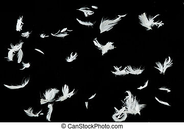 White Feathers Falling Over Black Background