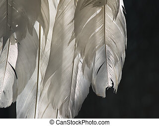 feathers - white feathers in backlight in front of dark...