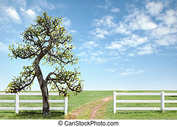 white fence on green grass with blue sky