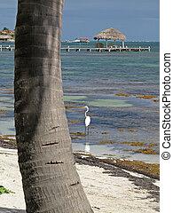 White Fishing Bird - A white bird fishing along the shallows...