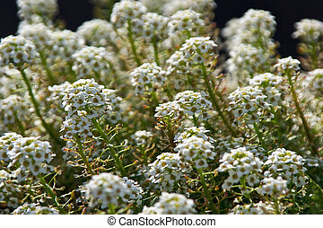white fllowers