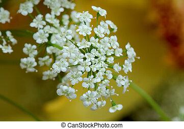White floret