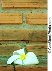 White flower against a brick wall.